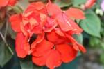 rouge 002.jpg