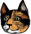 pp_catface05_c.jpg