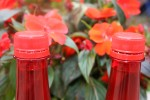 rouge 031.jpg
