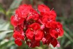rouge 016.jpg