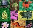 biodiversite2.jpg