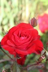 rouge 015.jpg